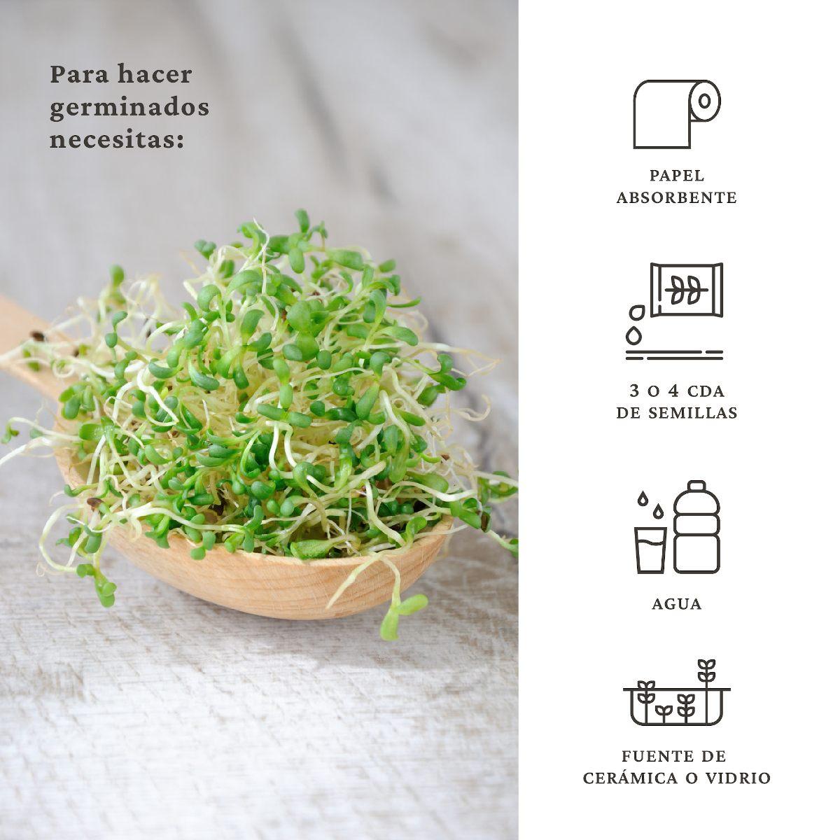 ingredientes de los germinados